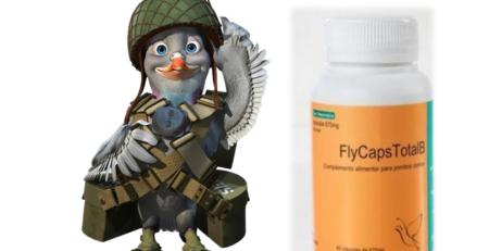 Preparação para provas - pombos - produtos para pombos - produtos para columbofilia